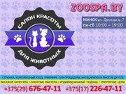Салон красоты для животных в Минске