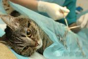 Стерилизация и Кастрация собак и кошек